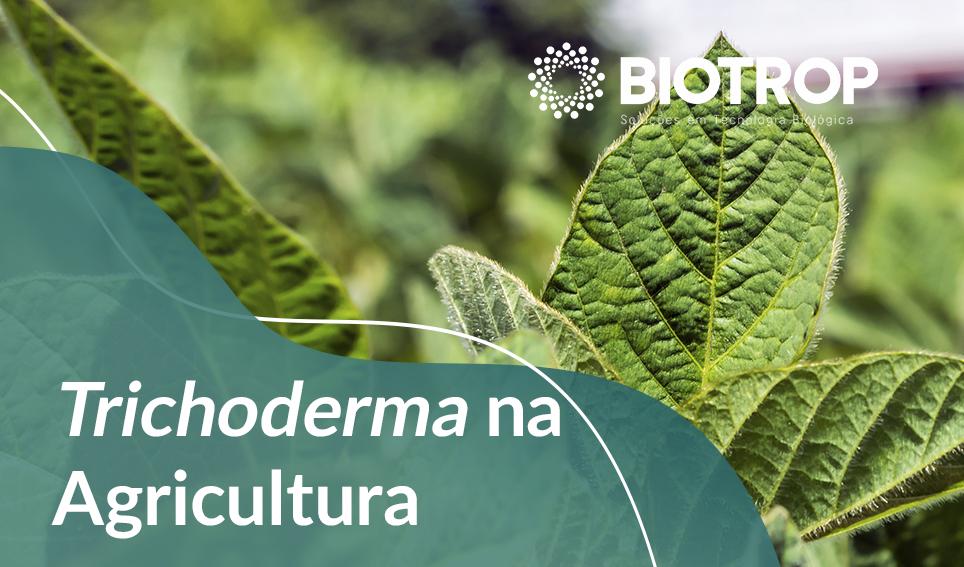 Embrapa lança publicação gratuita sobre Trichoderma na Agricultura