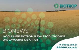 Inoculante biológico eleva a produtividade das lavouras de arroz