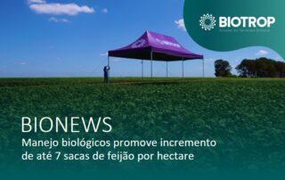 Manejo com biológicos promove incremento na cultura do feijão