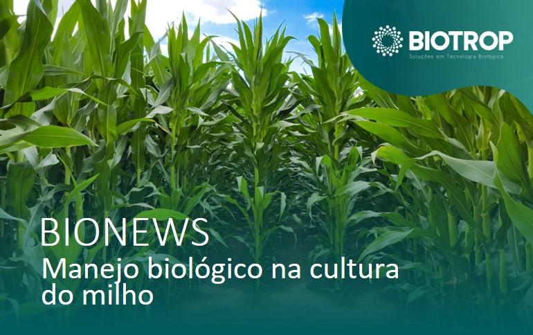Manejo biológico na cultura do milho